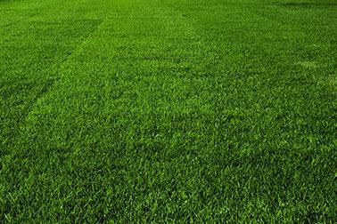 обучение технологии ухода за газоном футбольного поля